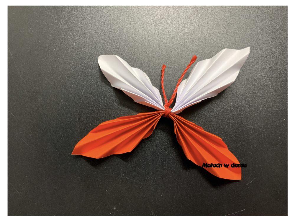 Biało-czerwony motylek