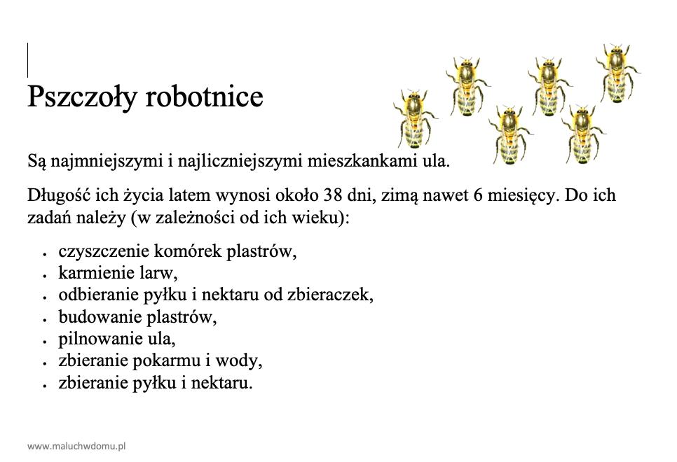 Zadania pszczół robotnic